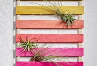 4PF - ombre stained air plant display