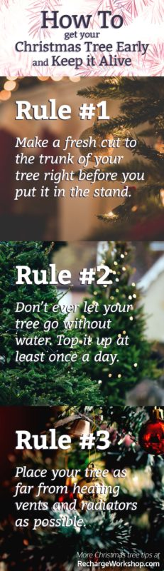 how to keep your christmas tree alive - What Do You Put In Christmas Tree Water