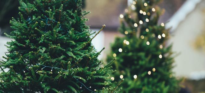3 Rules For Keeping Your Christmas Tree Alive Recharge